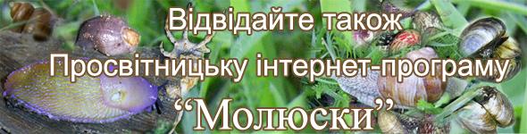 банер ПІП Молюси