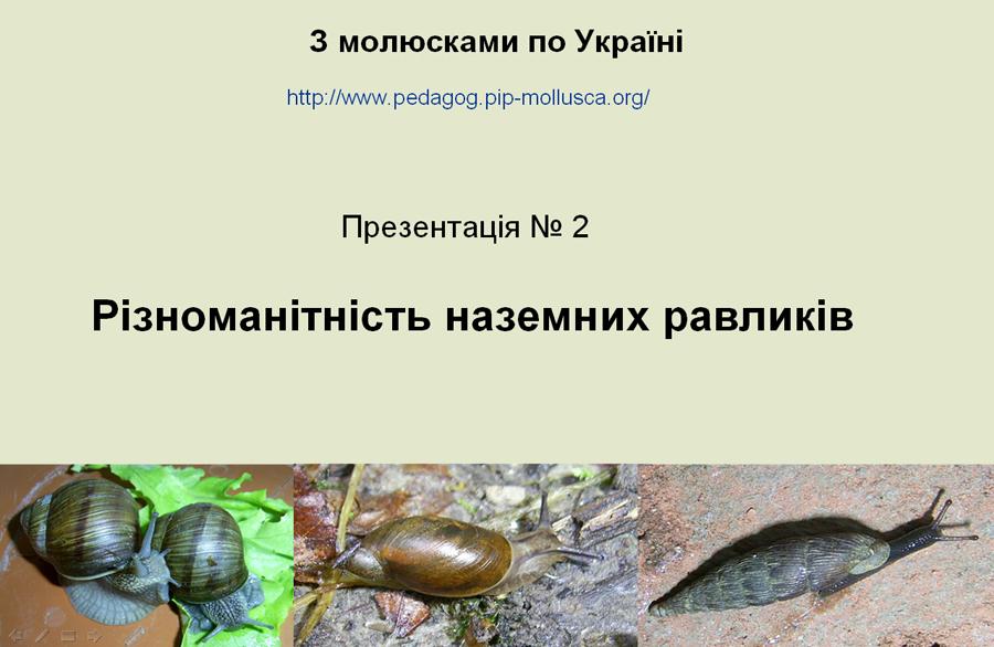 Презентація №2. Різноманітність наземних равликів